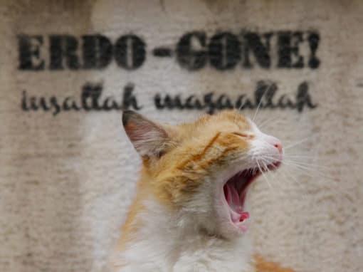 «Kedi, des chats et des hommes», la ville où chat va